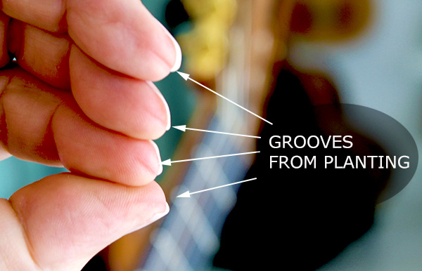 Grooves on the fingertips where planting occurs