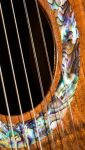 Macassar Ebony B&S, Franquette Walnut Top Concert Classical Guitar