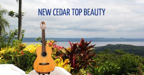 NEW Cedar Top Concert Beauty